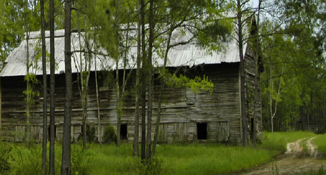Old Tobacco Barn - Gadsden County