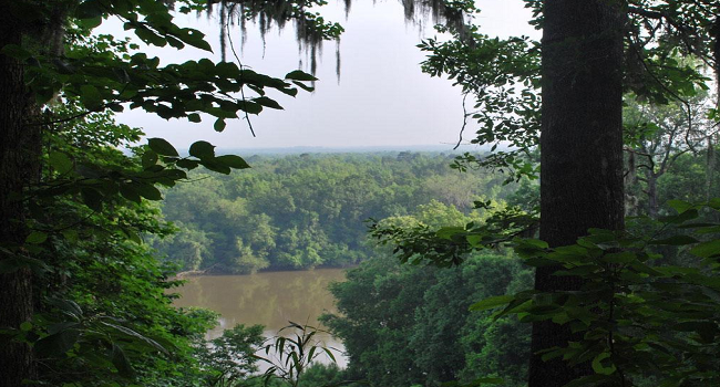 Apalachicola River View - Liberty County